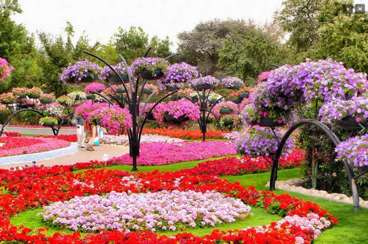 أزهار في تونس الخضراء