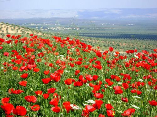 زهور المغرب الأبية