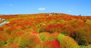"""حدائق جميلة: هيتاشي سي سايد"""" في اليابان"""
