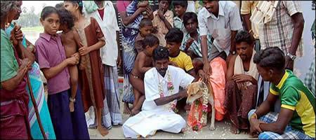 """الهند، تُجبر العروس الملتحقة بقبيلة """"تودا"""