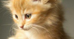 قطة مصرية محظوظة