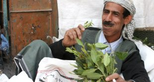 نبات القات تبعات نفسيه وصحيه واقتصاديه