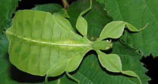 حشرات تشبه الازهار والاوراق