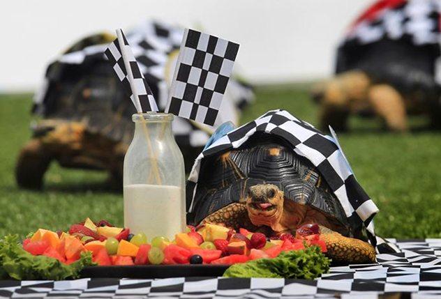 سباق السلاحف