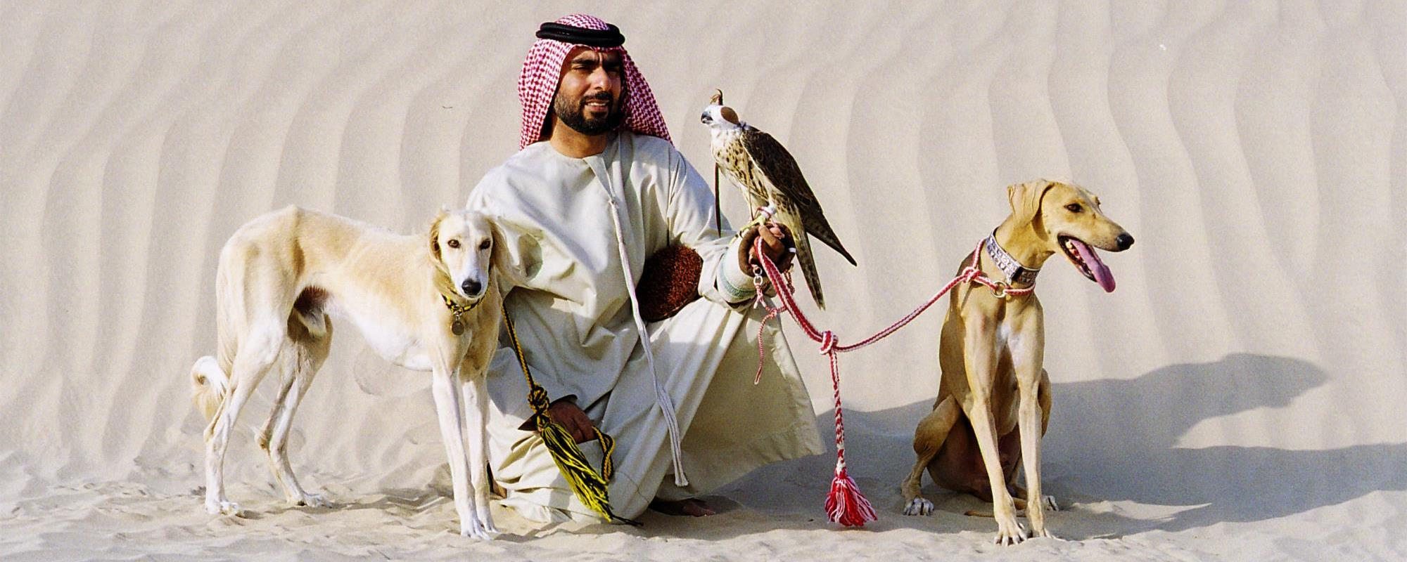 كلب السلوقي العربي