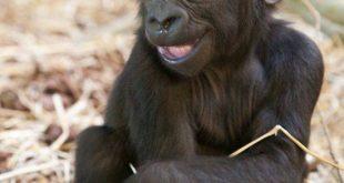 قدره الحيوانات على الضحك
