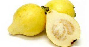 فوائد الجوافة الغذائيه