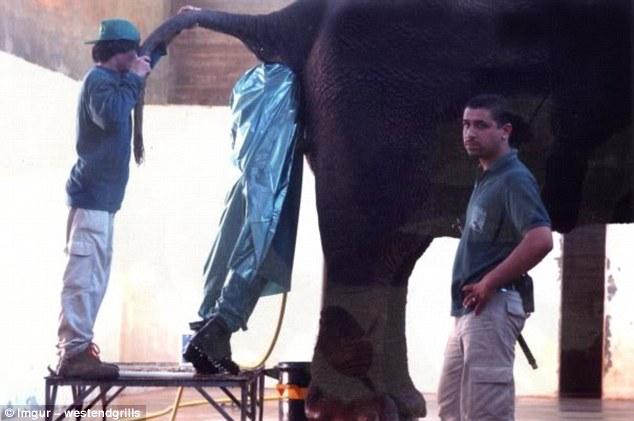 فحص الفيل من الداخل