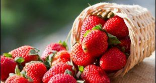 فوائد الفراولة الغذائيه