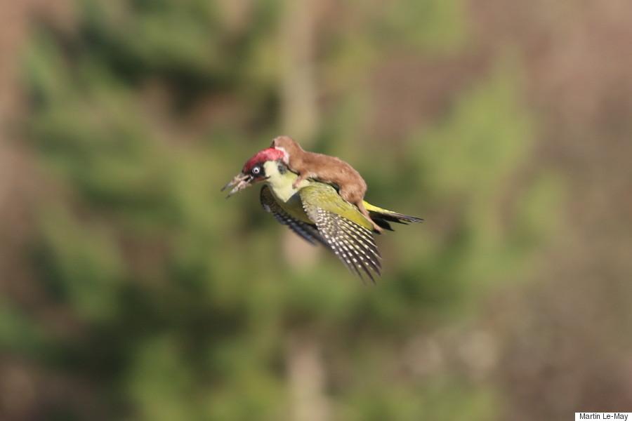 مجموعه من الفيديوهات والصور التي تثير الضحك لبعض الحيوانات